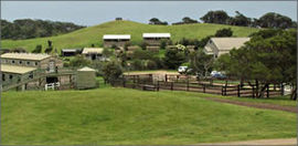 Ace Hi Riding Ranch - Accommodation Port Macquarie