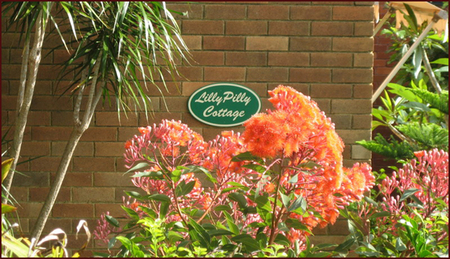 Lillypilly - Accommodation Port Macquarie