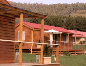 Maydena Country Cabins Accommodation  Alpaca Stud - Accommodation Port Macquarie