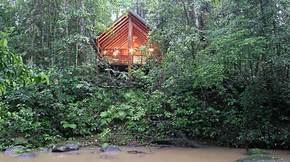 The Canopy Treehouses - Accommodation Port Macquarie