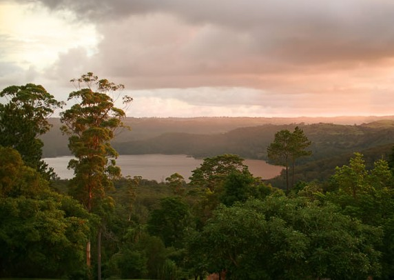 Montville Misty View Cabins - Accommodation Port Macquarie