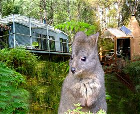Huon Bush Retreats - Accommodation Port Macquarie