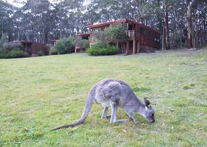 Jenolan Caves Cottages - Accommodation Port Macquarie