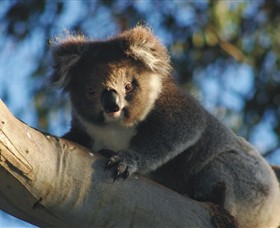 Bimbi Park Camping Under Koalas - Accommodation Port Macquarie