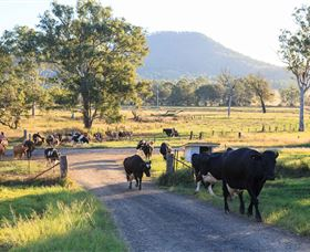 Tommerups Dairy Farmstay - Accommodation Port Macquarie