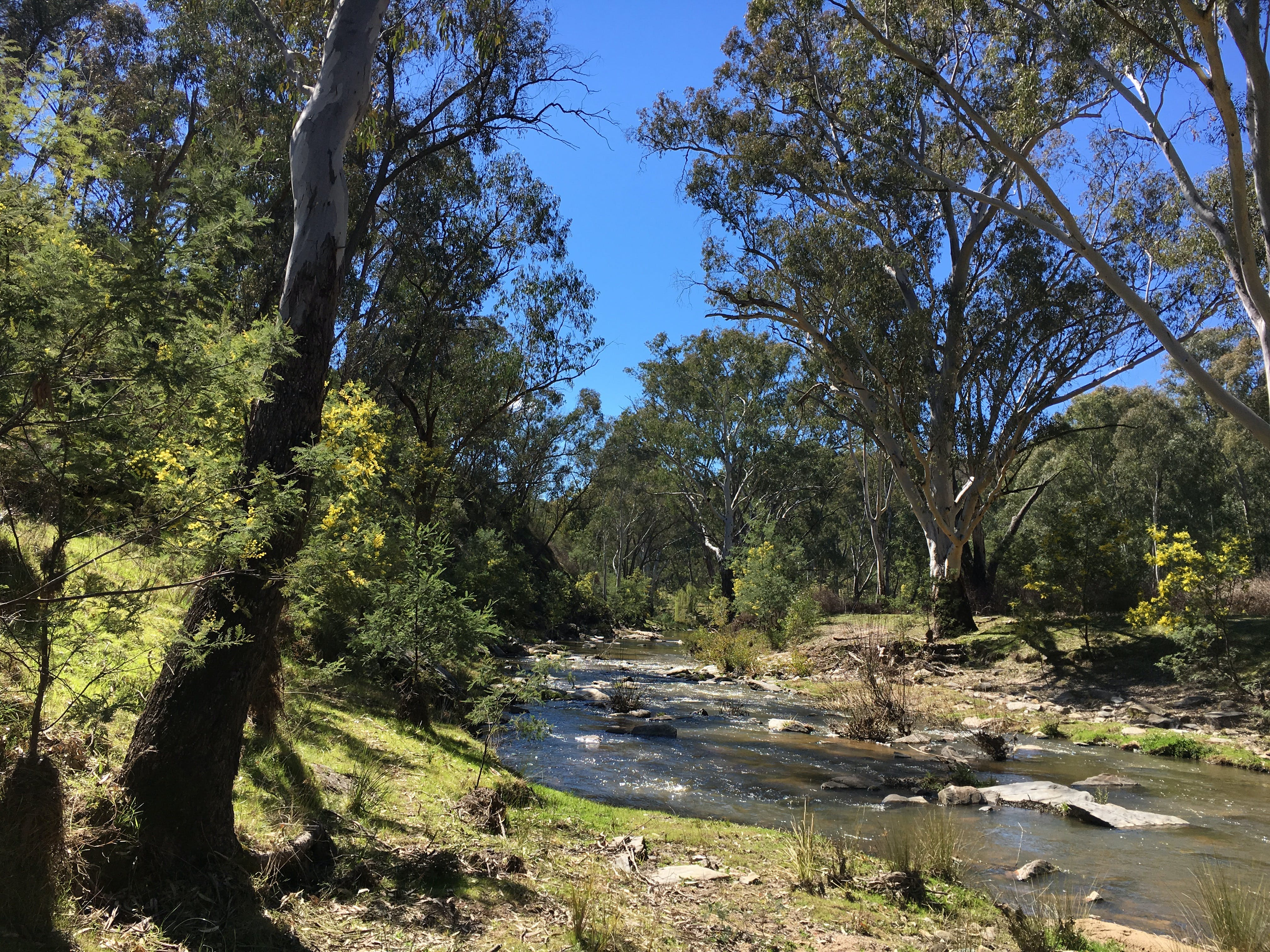 Highfield Farm and Woodland Bush Campsites - Accommodation Port Macquarie