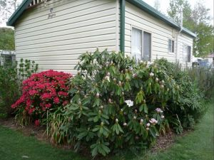 Jenolan Caravan Park - Accommodation Port Macquarie