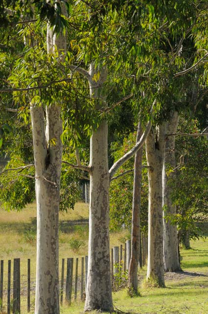 Stringybark Cottages - Accommodation Port Macquarie