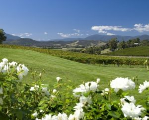Balgownie Estate Vineyard Resort and Spa - Accommodation Port Macquarie