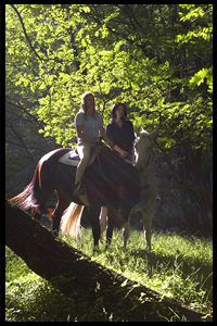 Glenworth Valley Horseriding - Accommodation Port Macquarie