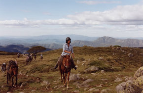 High Country Horses - Accommodation Port Macquarie