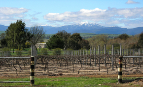 Buller View Wines - Accommodation Port Macquarie