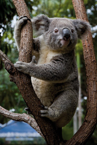 Currumbin Wildlife Sanctuary - Accommodation Port Macquarie
