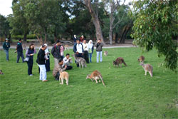 Caversham Wildlife Park - Accommodation Port Macquarie