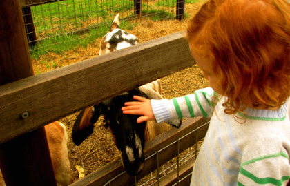 Collingwood Children's Farm