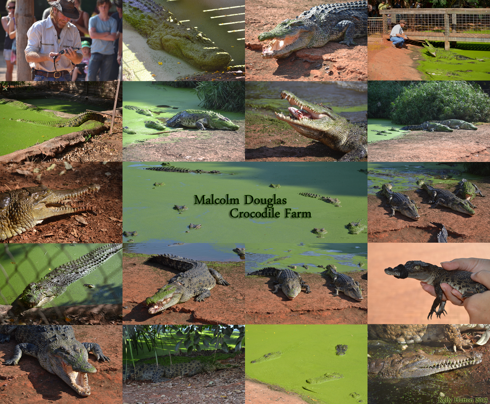 The Malcolm Douglas Crocodile Park - Accommodation Port Macquarie