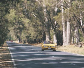 Ludlow Tuart Forest - Accommodation Port Macquarie