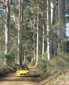 Mount Shadforth Scenic Drive - Accommodation Port Macquarie