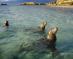 Shoalwater Islands Marine Park - Accommodation Port Macquarie