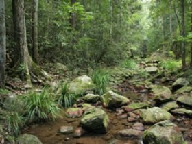Amamoor State Forest - Accommodation Port Macquarie