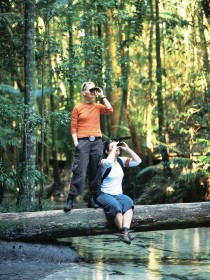 Birdwatching on the Fraser Coast - Accommodation Port Macquarie