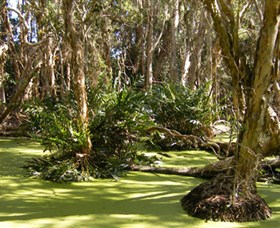 Arkarra Lagoons and Tea Gardens - Accommodation Port Macquarie