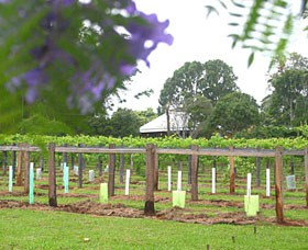 Douglas Vale Historic Homestead  Vineyard - Accommodation Port Macquarie