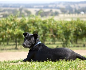 Moothi Estate Vineyard and Cellar Door - Accommodation Port Macquarie