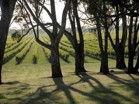 Henry's Drive Vignerons - Accommodation Port Macquarie