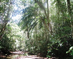 Mount Lewis National Park - Accommodation Port Macquarie