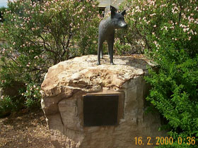 Dingo Statue - Accommodation Port Macquarie