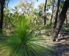 Brisbane Ranges National Park - Accommodation Port Macquarie