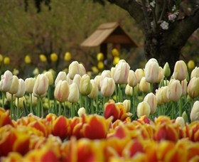 Tulip Top Gardens - Accommodation Port Macquarie