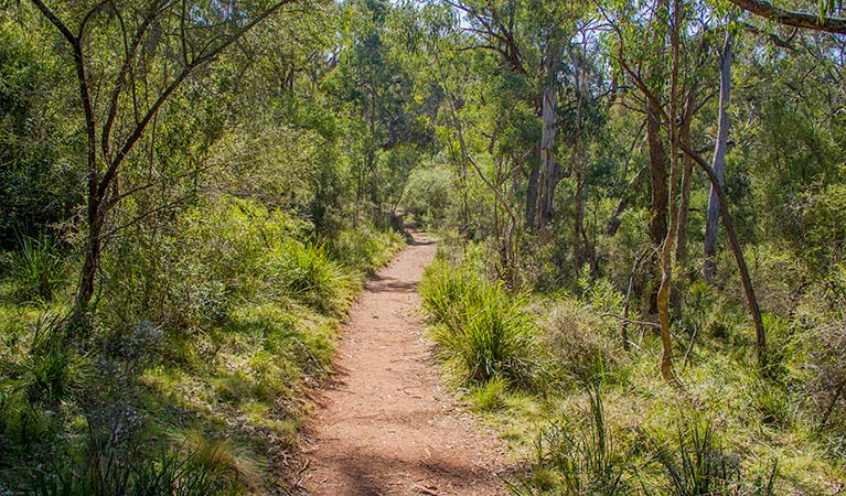Mares Forest Creek walking track - Accommodation Port Macquarie