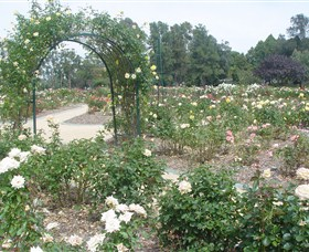 Victoria Park Rose Garden - Accommodation Port Macquarie