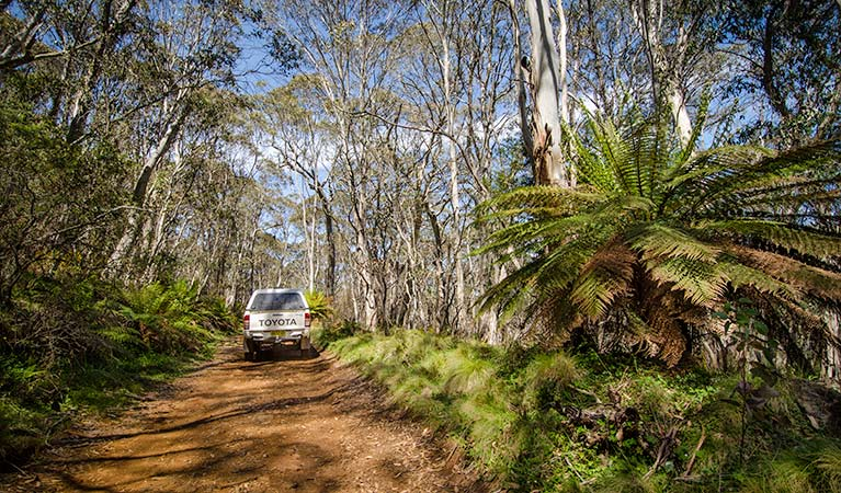 Barrington trail - Accommodation Port Macquarie