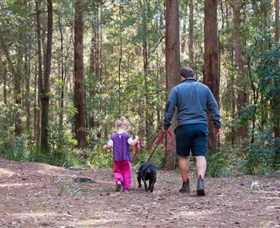Olney State Forest - Watagan Mountains - Accommodation Port Macquarie