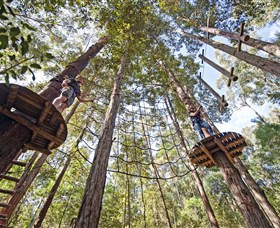 TreeTop Adventure Park Central Coast - Accommodation Port Macquarie
