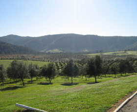 Hastings Valley Olives - Accommodation Port Macquarie