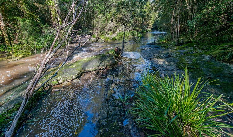 Dawson River walking track - Accommodation Port Macquarie