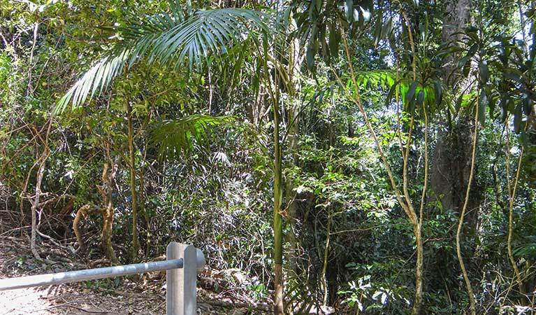 Goorgana walking track - Accommodation Port Macquarie