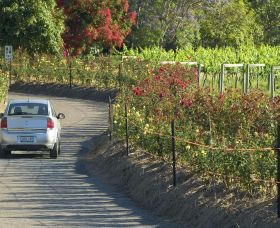 Cassegrain Wines - Accommodation Port Macquarie