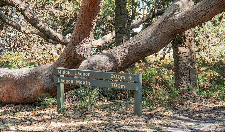 Middle Lagoon walking track - Accommodation Port Macquarie