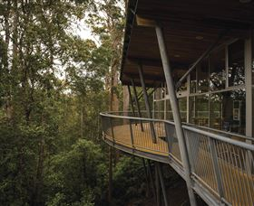 Tarkine Forest Adventures - Dismal Swamp - Accommodation Port Macquarie