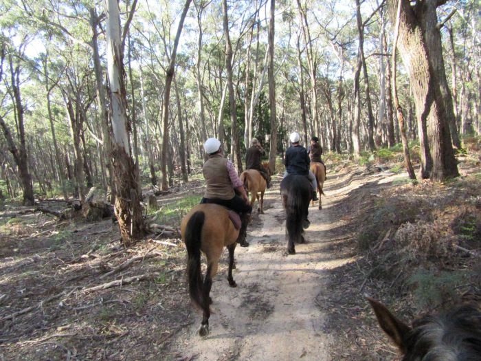 Silver Brumby Trails - Accommodation Port Macquarie