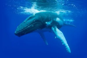 Dunsborough Whale Watching Eco Tour - Accommodation Port Macquarie