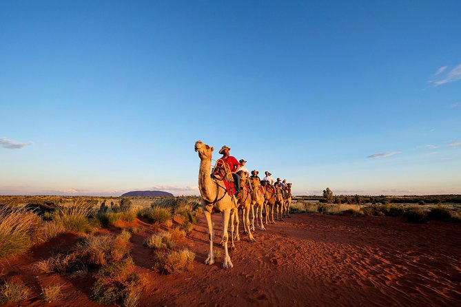 Uluru Camel Express Sunrise or Sunset Tours - Accommodation Port Macquarie