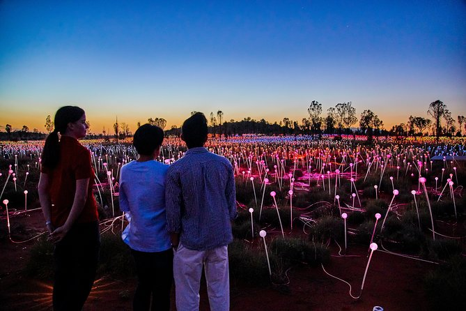 Uluru Field of Light Sunrise Tour - Accommodation Port Macquarie