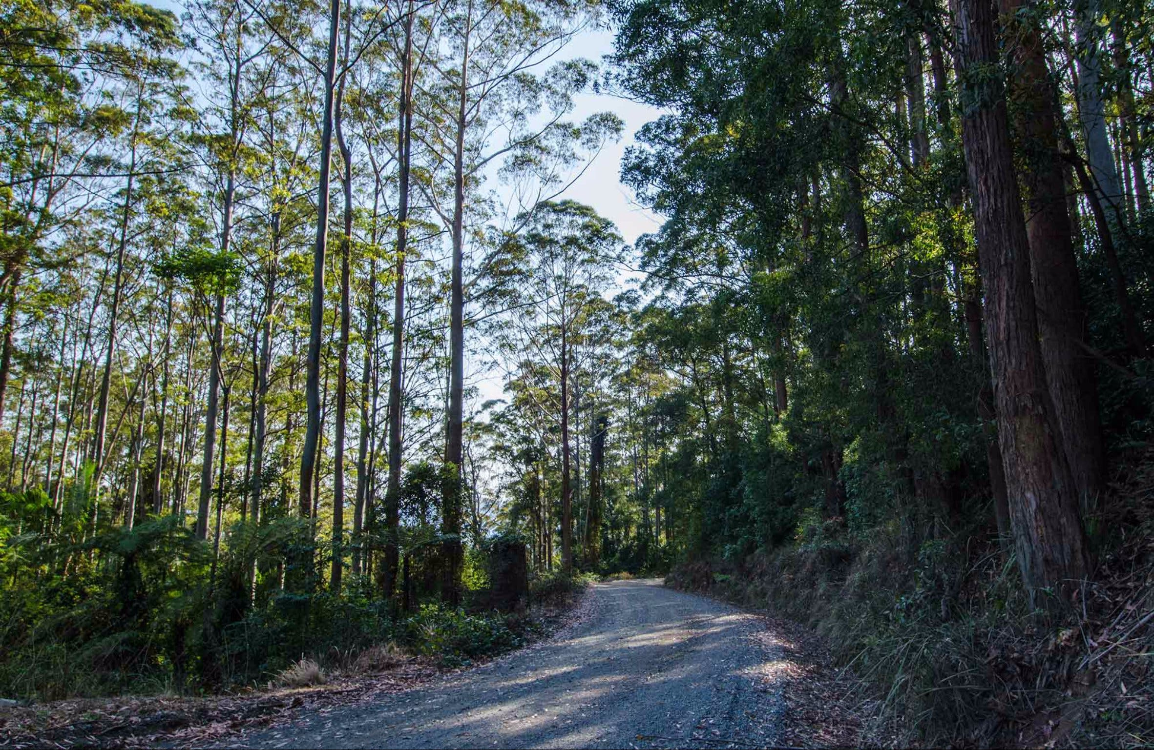 Hastings Forest Way Touring Route - Accommodation Port Macquarie