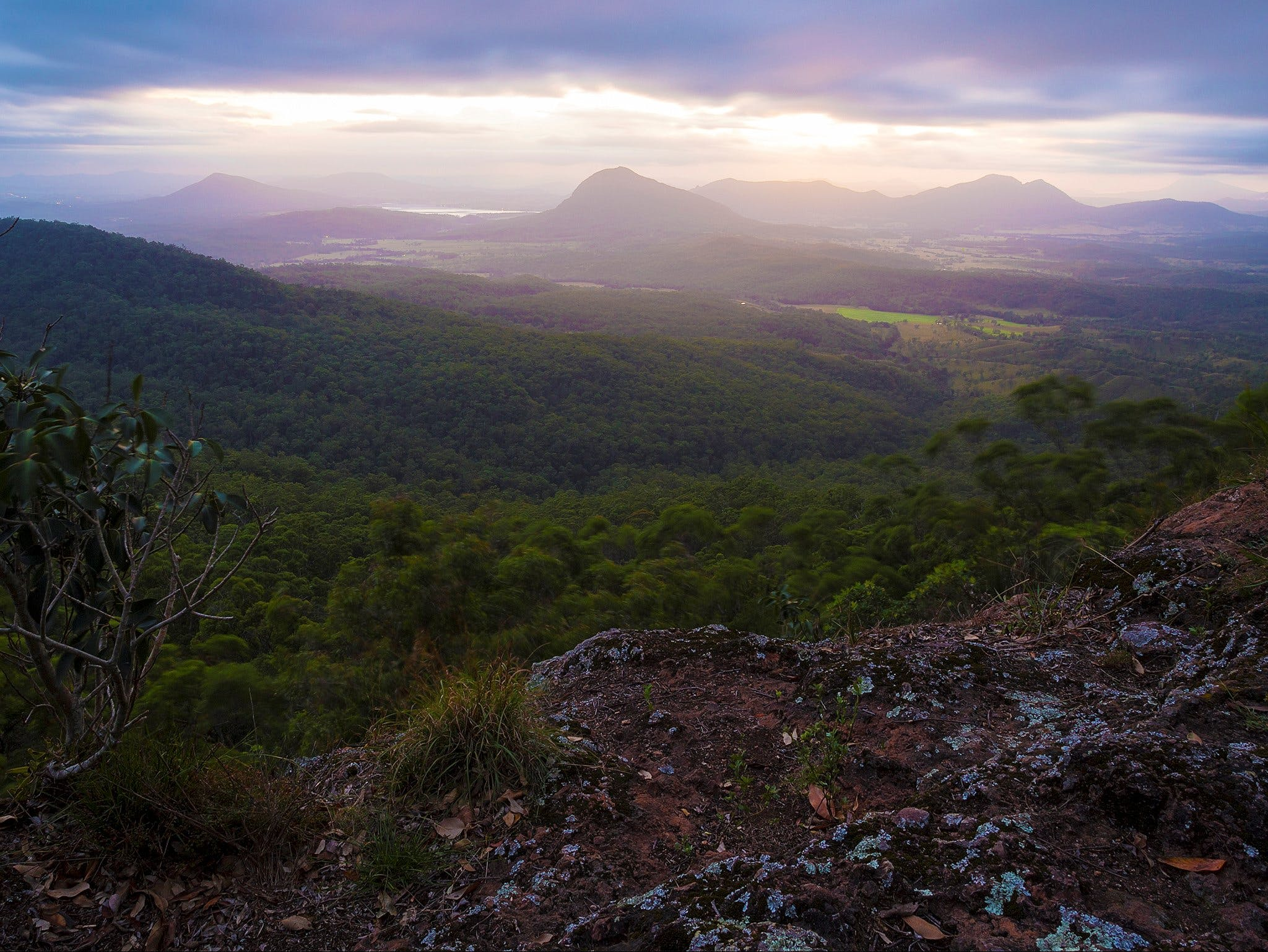 Cunninghams Gap and Spicers Gap Main Range National Park - Accommodation Port Macquarie